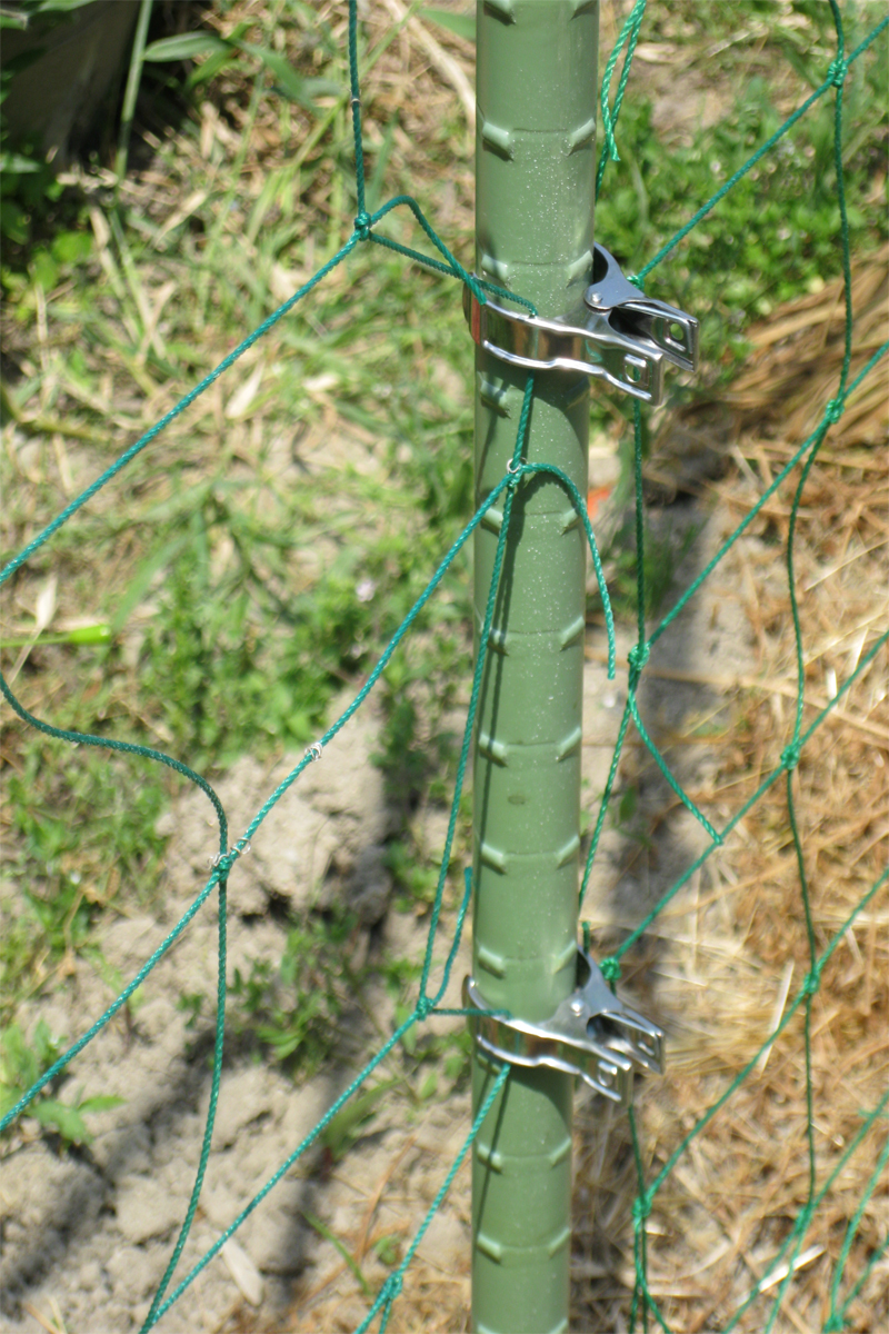 きゅうりネット用支柱・イボ竹などにも使えるステンレスピンチ(大)